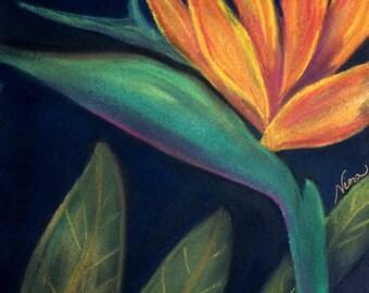 "Soft Pastel, drawing,  bird of paradise  multi color, flower, floral, garden, art 12""x12"" canvas paper"