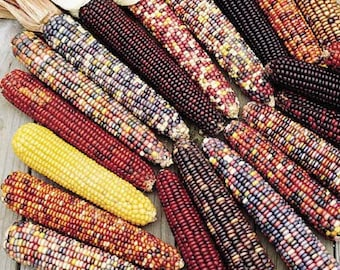 VCOO)~UNDERWOOD'S ORNAMENTAL Corn~Seeds!!~~~Great Diversity of Color!!