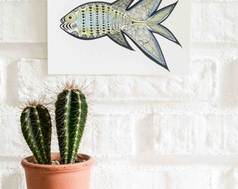 Fish Illustration Postcard