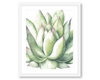 Succulent Print - Succulent Wall Art - Succulent Art print - Succulent decor - Cactus Print - 8x10 on 8.5x11 paper - Frame Not Included