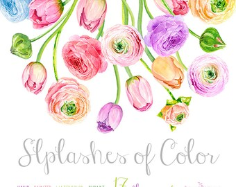 Bouquet Ranunculus and Tulips. Hand Drawn Clip Art Watercolor - digital flowers, DIY invites, scrapbooking, wedding invitations