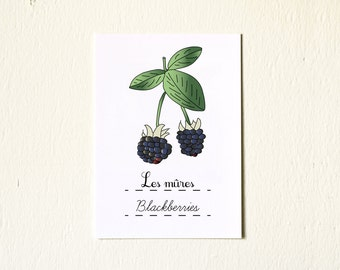French Kitchen Art illustration Blackberries Summer Fruit 5x7 Giclee Fine Art Print French eco friendly black Home Decor Nature berries