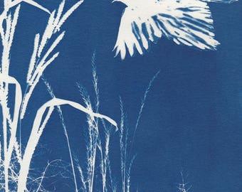 Flying Crow Cyanotype Sunprint