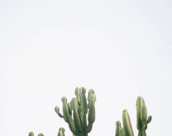 Cacti in San Diego