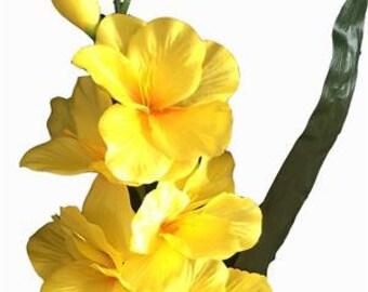 65CM --Gladiolus