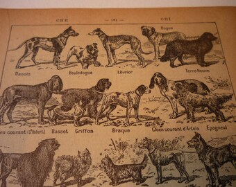 French Lithograph - Dogs - 1920s engraving - original