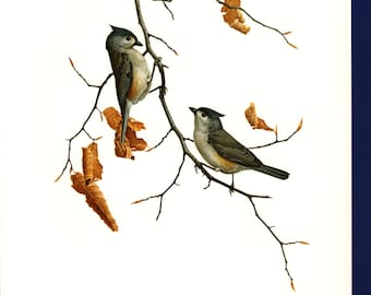 Vintage Tufted Titmouse Poster, PMLansdowne, Glossy Print of Bird Watercolor by  J.F. Lansdowne, 8 x 10 Wall Art