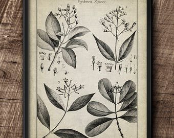 Botanical · Flower · Instant Download · Vintage · Art · Wall · Printable · Digital File #25