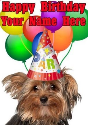 Super Yorkshire Terrier cane buon compleanno PID734 A5 JD75