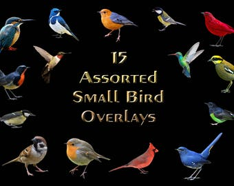 Buy 3 get one free. Pack of 15 Assorted Small Bird Overlays, Separate PNG Files, High Resolution, Instant Download.
