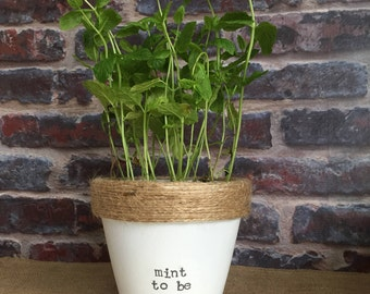 Plant pot gift 'mint to be' - wedding/anniversary/valentines