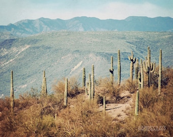 Desert landscape photography, Southwest photograph, Western photo, office decor, wall art - Arizona Cacti