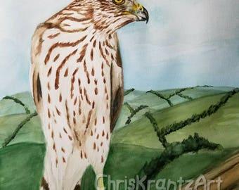 Juvenile Cooper's hawk youth  12x16 inch young chicken hawk bird of prey Original painting
