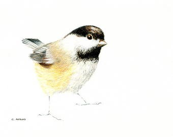 5 x 7 Black Capped Chickadee Original Colored Pencil Sketch
