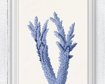 Blue coral branch  Antique sealife Illustration - Beach house wall decor, Sea life illustration in blue, Bathroom SWC095