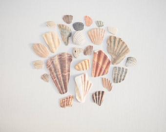 SHELL FRAGMENT PIECES, broken shells, beach find collection, coastal craft, mosaic, nautical, natural supplies, vase filler, organic decor