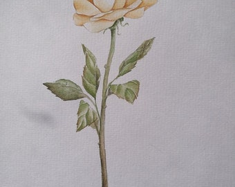 Yellow Rose Botanical, Original Watercolour Painting