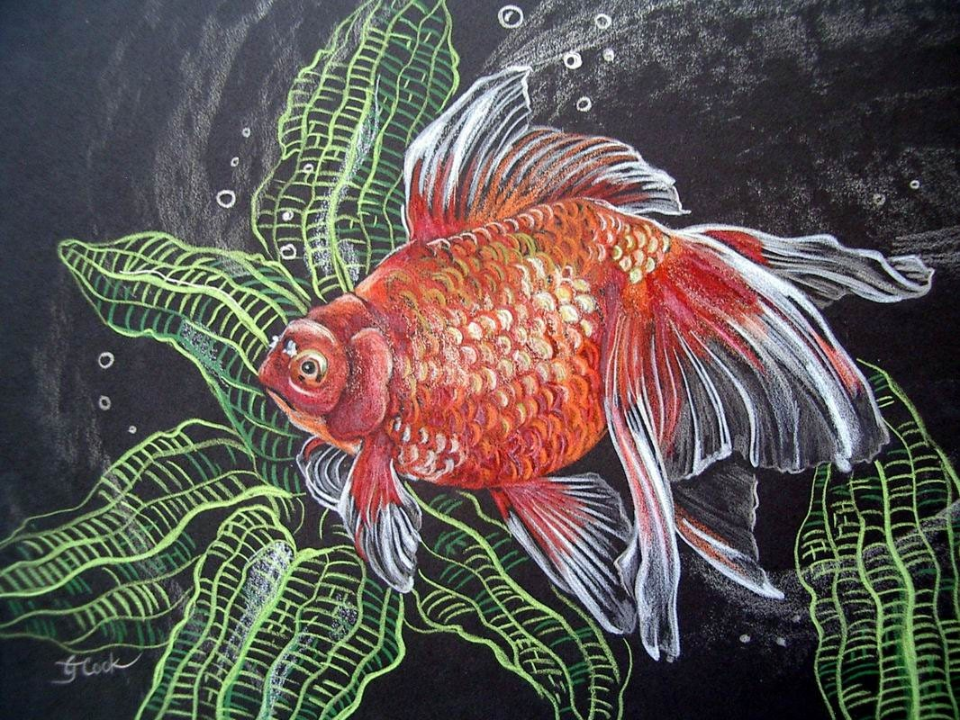 Oranda Goldfish Painting Aquarium Original Colored Pencil Art