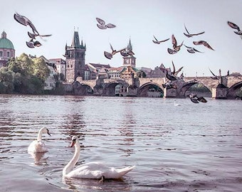 Prague Print, Swan Print, Prague Photography, Charles Bridge, Travel Print, Fairytale Print