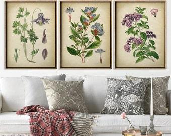 Botanical print set of 3, flower print set, botanical poster, botanical wall decor, scientific illustration, instant collection