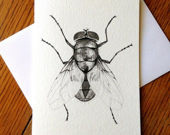 Fly, Housefly, Insect, 5 x 7 Black and White Illustrated Blank Card, Entomology