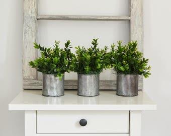 Three Galvanized Pots of Boxwood,  Farmhouse Centerpiece, Boxwood Centerpiece, Rustic Centerpiece, Touch of Green, Boxwood Topiary