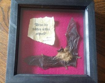 """Bram Stoker's Dracula """"For the dead travel fast"""" framed bat"""