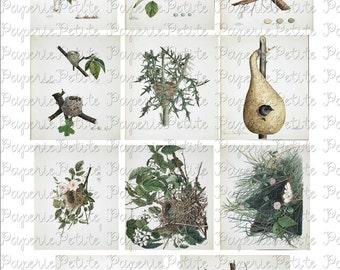 Bird Nests Digital Download Collage Sheet