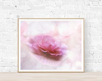Pink Dreams Begoinia instant download flower photogaphy