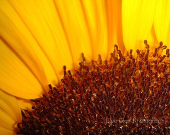 Assorted Blank Note cards-6 pack Sunflower, Muscari, and Through the Looking Glass images