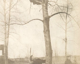"Vintage Photo ""Up A Tree"" Surveyors Man Hurling Pole To Man In Tree Tripod Surveying Equipment Found Vernacular Photo"