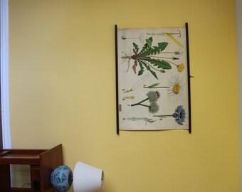 Warming - Balslev Botany Wall Chart – WB14 – Dandelion, Daisy, Thistle, Cornflower