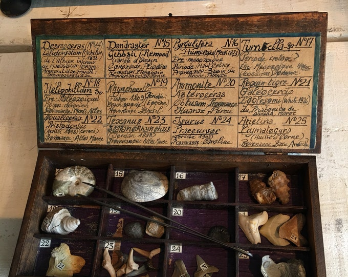 Antique fossils wood box French museum style