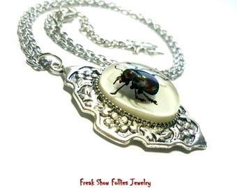 real scarab beetle specimen oddity silver necklace
