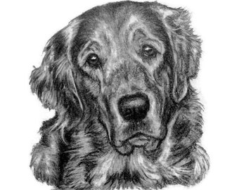 Custom Pet Portrait Special Size & Pricing Uninvolved Hand Drawn Sketch