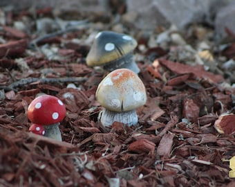 Cluster Of Toadstools In Fairy Garden Photograph Wall Hanging Wall Art Fine Art Photograph Great Unique Christmas Gift