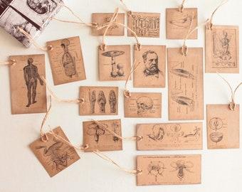 16 labels Curio Cabinet, paper kraft 210 g, embellishments, Scrapbooking, gift, bookmark, 1133 tag