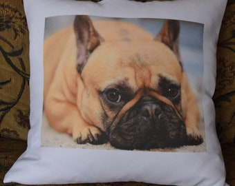 Your Pet on an 18X18 decorative pillow cover