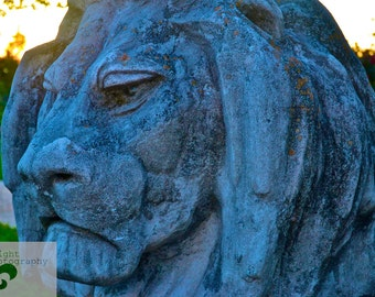 8x10 the Graceful Oaks- City Park Lion 2
