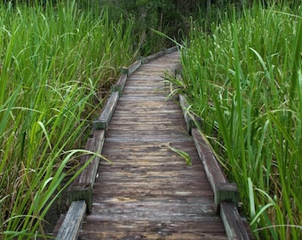The Swamp Closes In - landscape photograph - nature south southern swamp boardwalk path explore