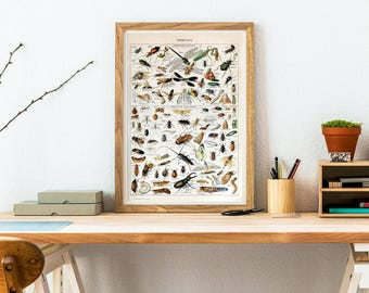Insect  Pint - Insect Poster - Sсience Wall Art Print - Entomology Illustration - Dragonfly - Beetle Print - Insect Art - Entomologist gift