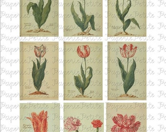 Tulip Digital Download Collage Sheet C