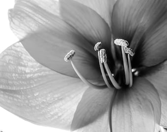 Botanical Photography, Flower Photography,  8x10 fine art print, Black and White,Chic,Elegant,Nature, GBK's 2013 Primetime Emmys Gift Lounge