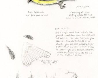 Goldfinch, Bird Drawing, Bird Sketch, Nature Journal, Inspirational