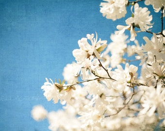 White Magnolia Tree Flowers on Blue Sky, Floral Home Decor, Office, Nursery