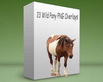 Wild Pony Overlays
