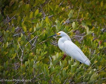 Great Egret hanging out in the bushes