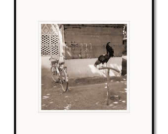 Black and white photography, sepia prints, Bantayan Island Philippines, Cebu, bike, fighting cock rooster, tropical island village, chicken