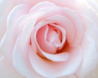 Delicate Pink Rose Fine Art Photographic Blank Greetings Card