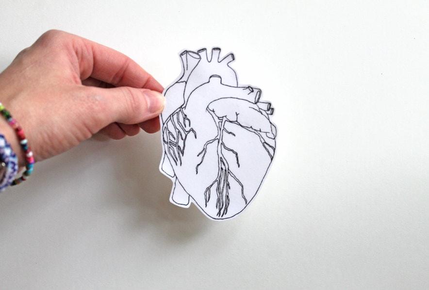 Anatomical heart heart sticker anatomical heart sticker